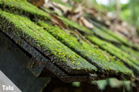 moos entfernen auf terrasse  anleitung hausmittel