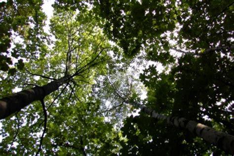 Leiter Botanischer Garten Braunschweig by Arboreten De Botanischer Garten Der Tu Braunschweig