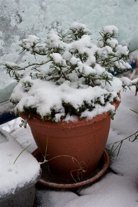 balcony gardening  winter balcony winter care  plants