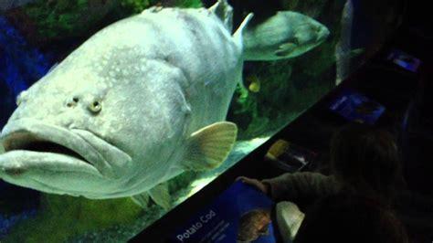 aquarium fish ripley grouper toronto