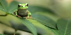 The Amazing Science Of Frogs U0026 39  Sticky Tongues