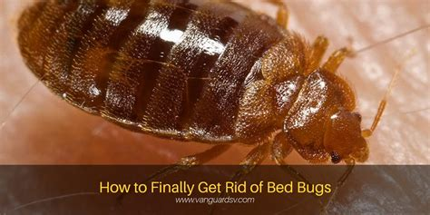 where to get rid of mattress janitorial services tips to get rid of bed bugs fresno