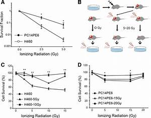 Induction Of Radioresistant Cells In Vivo   A  Clonogenic Survival
