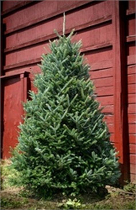 green valley christmas trees meets customer demand