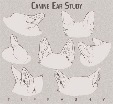 images  draw animal ears  pinterest