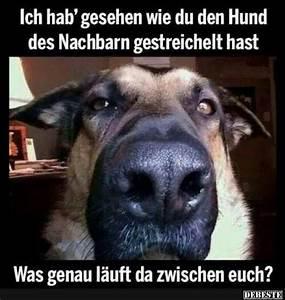 Ich Suche Einen Großen Hund : wie ficke ich einen hund ~ Jslefanu.com Haus und Dekorationen