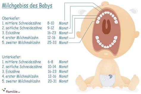 dieser reihenfolge kommen die ersten zaehnchen baby