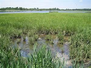 Main Creek Wetland Restoration