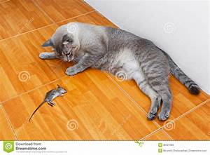Cat kill rat stock image image of catch hair natural for Mice in between floors