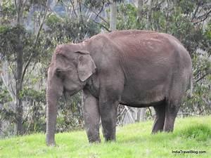 Watch Wild Elephants In Munnar
