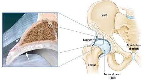 image gallery hip labrum anatomy