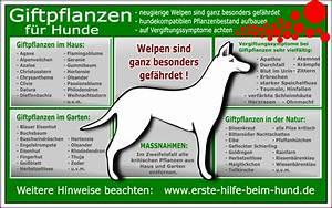 Welche Pflanzen Sind Für Hunde Giftig : erste hilfe beim hund giftige pflanzen ~ Watch28wear.com Haus und Dekorationen