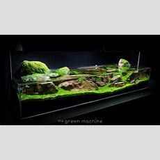 Aquascape Tutorial Guide 'continuity' By James Findley