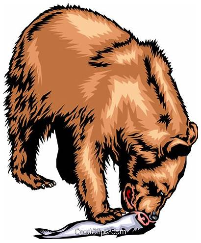Grizzly Bear Eating Salmon Vector Clip Clipart