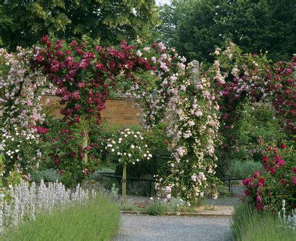 arches  climbing roses   rose garden  mottisfont