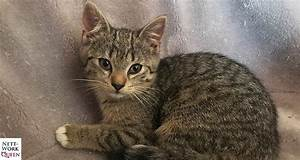 Was Muss Ich Bei Einem Hauskauf Beachten : ratgeber was muss man alles bei babykatzen beachten ~ Markanthonyermac.com Haus und Dekorationen
