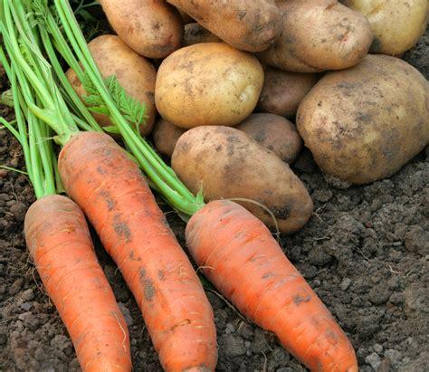 Root Vegetables Hartleys