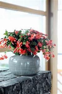 Plante Fleurie Intérieur : 10 plantes d int rieur fleuries et faciles vivre gamm vert ~ Premium-room.com Idées de Décoration