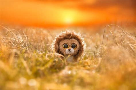 Nature And Animals Hd Wallpapers - nature animals toys sad field sun depth