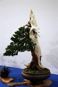 eibe bonsaipflegech With feuerstelle garten mit bonsai eibe