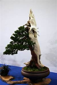 eibe bonsaipflegech With whirlpool garten mit eibe bonsai