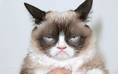 easy tips  handling grumpy cat customers