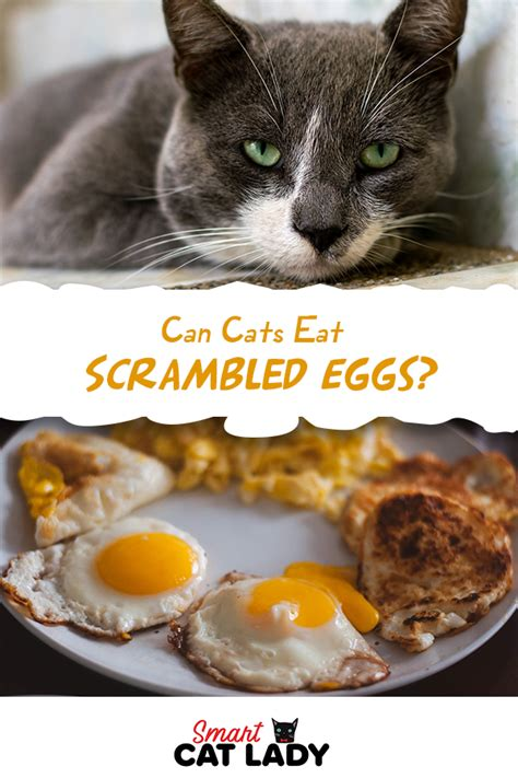 What cats can t eat