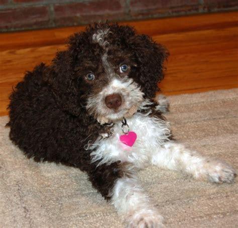 Filelana As Puppy Jpg