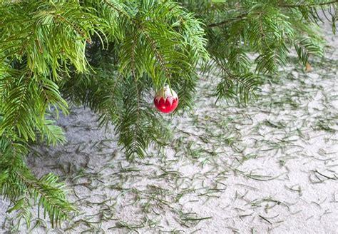 christmas tree needles john hembree