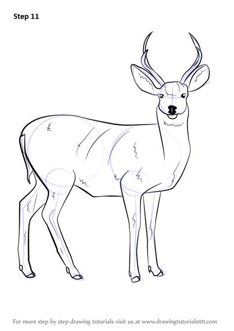 step  step   draw  mule deer drawingtutorialscom