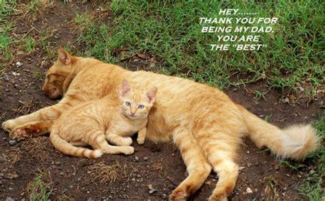kitten    ecards greeting cards