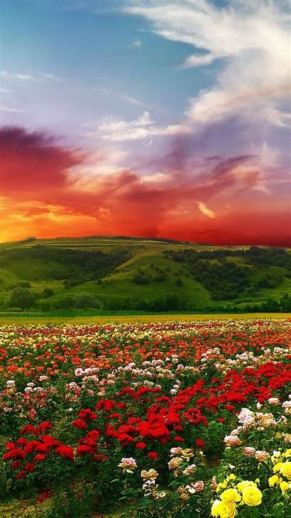 4k Colorful Wallpapers Clouds Ultra Flowers Colors