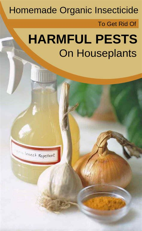 homemade organic insecticide   rid  harmful pests