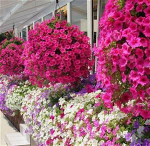 Blumen Für Den Balkon : blumen lieferdienste blog archive blumen f r balkon ~ Lizthompson.info Haus und Dekorationen