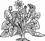 Clipart Bush Outline Clip Shrubs Library Plants Cliparts sketch template