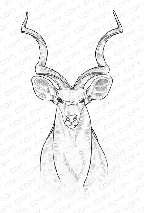 coloring pages  sketchesdrawings art sketches