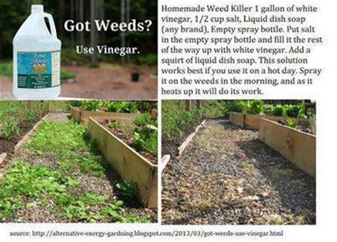 pin  homemade weed killer
