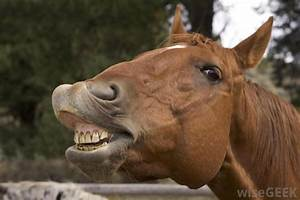 What Is A Horse   With Pictures