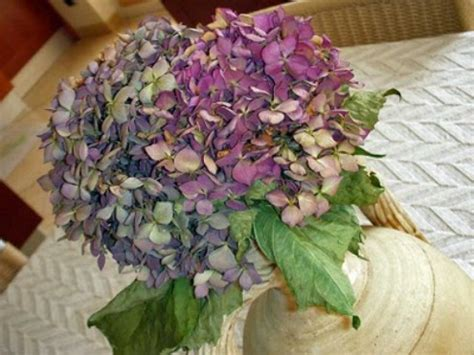 fiori secchi ortensie come essiccare le ortensie come fare tutto