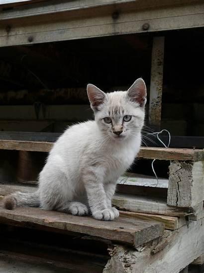 Kitten Tabby Cat Gray Brown Eyes Peakpx