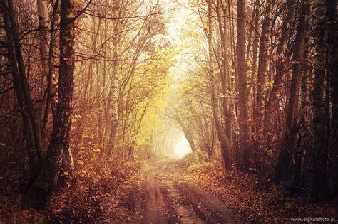 cuisine d ete paysage féerique route dans la forêt images photos