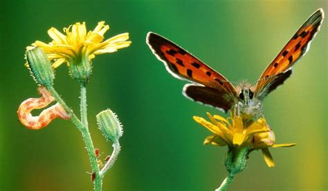 Hd Butterfly Hd Wallpapers 1080p For Your Desktop