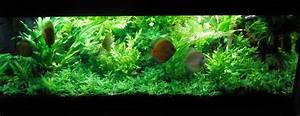 Aquarium Bodengrund Berechnen : aquas page ~ Themetempest.com Abrechnung