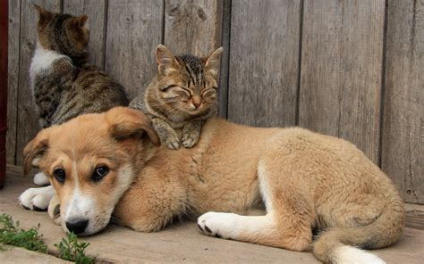 Animals, Cat, Dog Wallpapers Hd / Desktop And Mobile