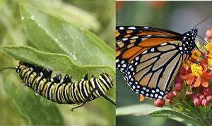1  The Caterpillar And The Butterfly  U2014 Climate Healers