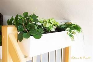 Pflanzen Im Treppenhaus : die neue lust an zimmerpflanzen mehr als gr ne dekoration ~ Orissabook.com Haus und Dekorationen