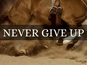 Bull Riding Quotes and Sayings