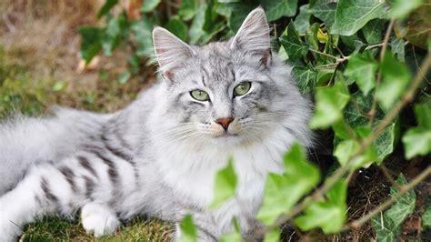 Welche Pflanzen Für Katzen Giftig Ist