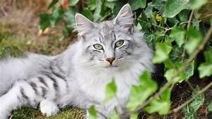 Katzen In Mietwohnung 2016 : welche pflanzen f r katzen giftig ist ~ Lizthompson.info Haus und Dekorationen