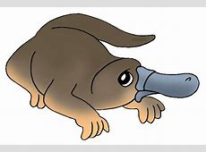 Clip Art Australian Animals Clipartsco